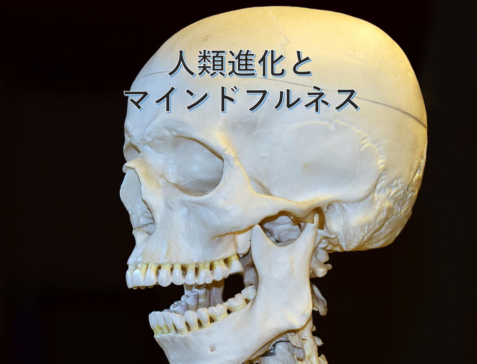 人類進化とマインドフルネス