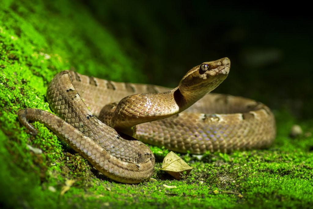 草むらの蛇